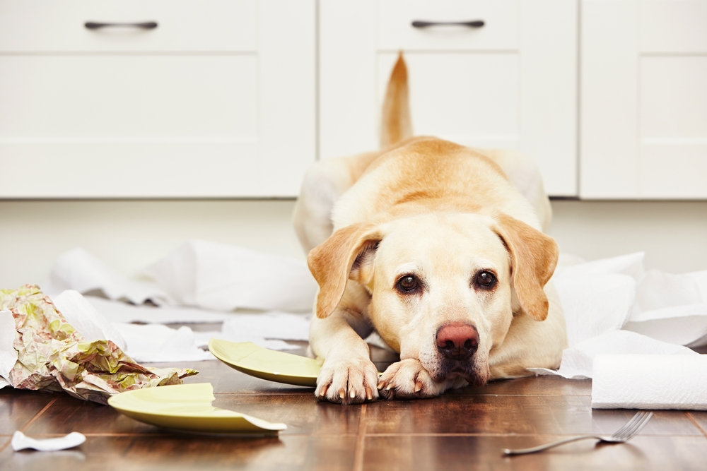 dog misbehaving