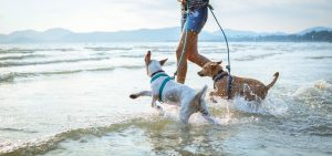 dogs getting active in the summer