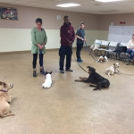 Basic Dog Group Class