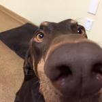 Big Dog Nose