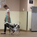Damatian Dog Training