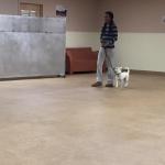 Dog Learning Heel