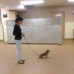 Dog Training Class1