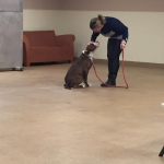 Pitbull learning come