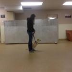 dog training class3