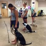group dog training glass