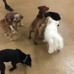 puppy socialization class
